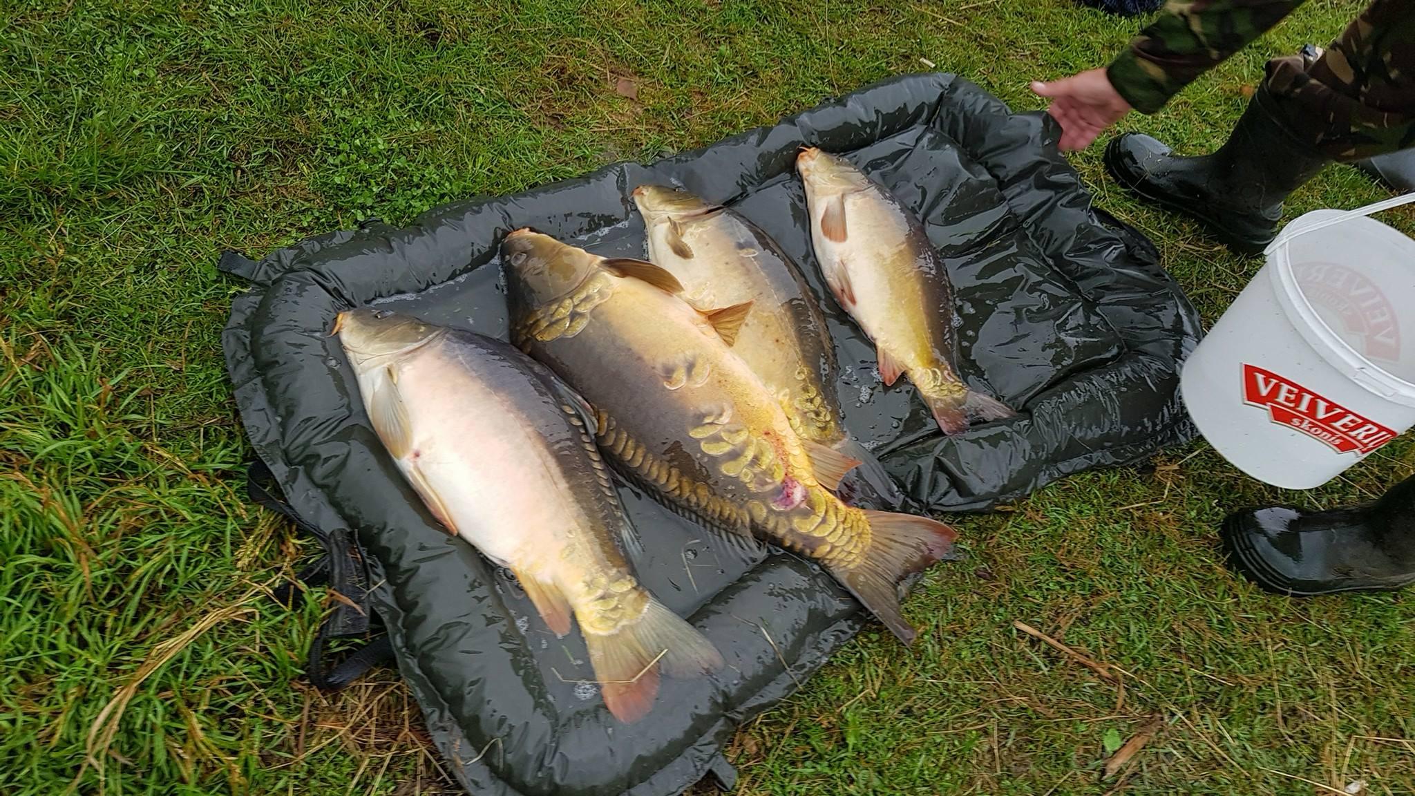 Karpiai žvejyba
